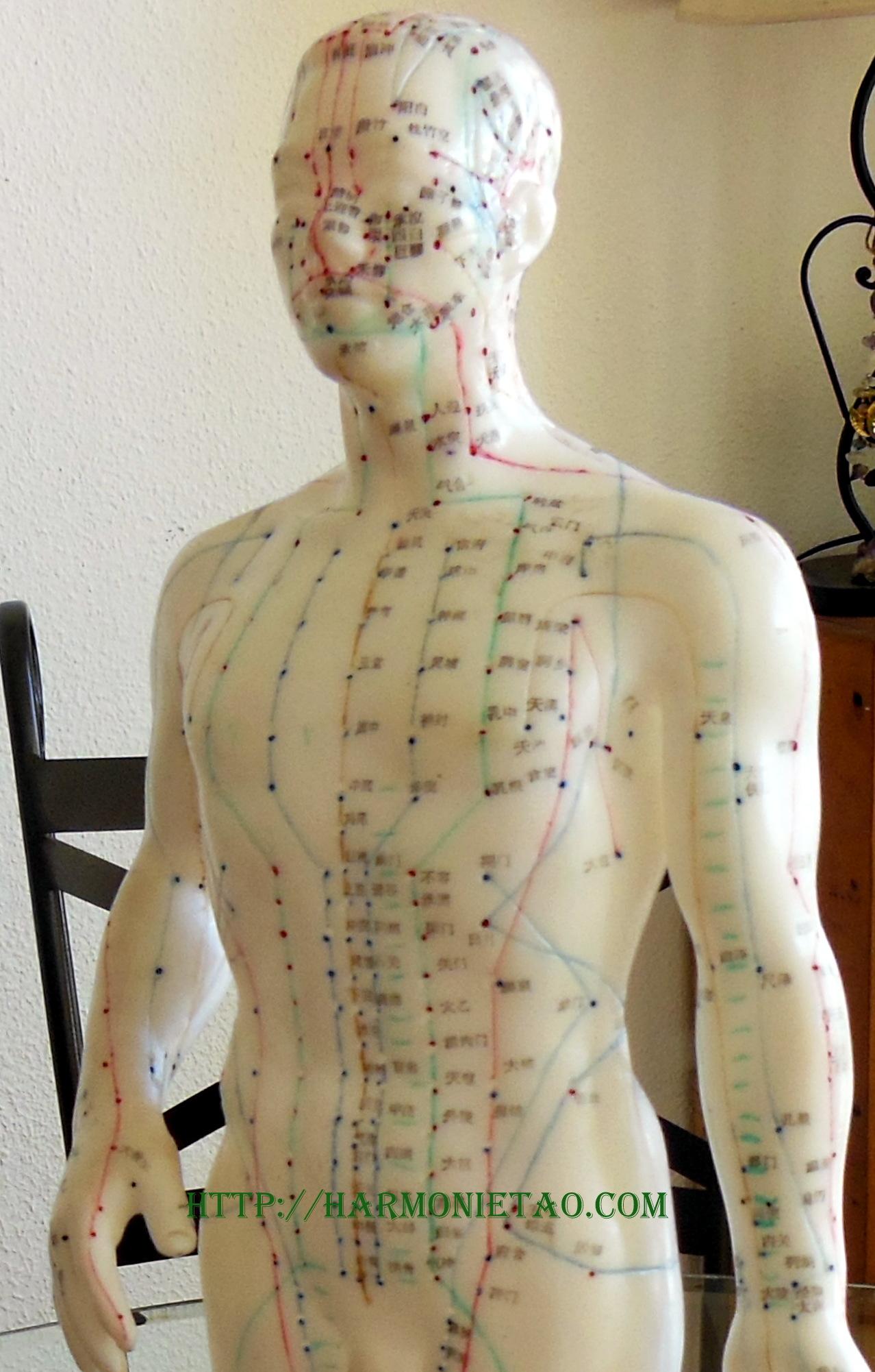 Étirement des méridiens tendinaux-musculaires.